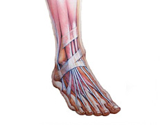 General Statistics About Foot & Ankle Problems